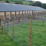 가축 Fence 또는 Pig Fence /Deer Fence/Field Fence/Fence Price