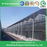 Surtidores de los fabricantes del invernadero de China Venlo