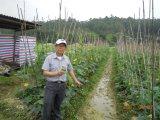 Melhoria de solo de Unigrow para alguma plantação vegetal do melão