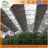 太陽Hydroponic温室