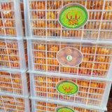 Mandarino dolce fresco del bambino di Nanfeng