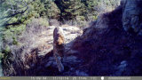 1 Waterproof Wildlife Camera에 대하여 12MP HD 1080P 8