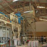 molino harinero de calidad standard europeo de trigo 80tpd con el edificio de la estructura de acero