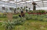 Eco-Sightseeing консерватория парника/теплицевый/большой садовод