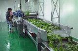 Máquina De Lavagem De Legumes De Folha À Bolha De Água De Ozônio Industrial