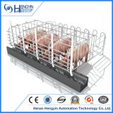 Гальванизированная клеть свиньи беременность хавроньи Swine свиньи порося