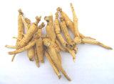 Extracto siberiano del Ginseng del glucósido del 80% Acanthopanax