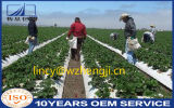 Tela resistente UV do Nonwoven de Spunbond da proteção da agricultura