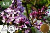 5:1 natural /Syzygium Aromaticum do extrato do cravo-da-índia de 100%