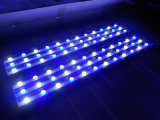 47inches White+Blue per gli indicatori luminosi dell'acquario di sviluppo LED della barriera corallina