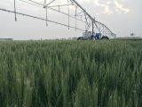Bewässerung-Controller für grossen Bauernhof