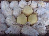 Birne China-72/80/96/112/18kg /Carton Ya