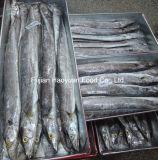 Preiswerte gefrorene Farbband-Wasserfische