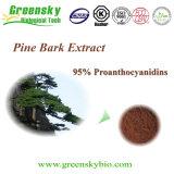 Poudre employée couramment d'écorce de pin