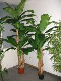 Albero di banana artificiale delle piante di buona qualità di Gu-Jtla518