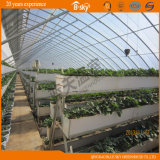 PlantingのためのPlastic Film Coveredと太陽Greenhouse