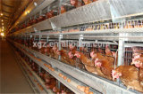 un Type Automatic Poultry Farm Layer Cage