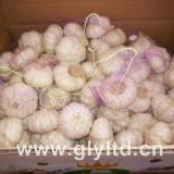 sacchetto della maglia 20kg che imballa aglio bianco normale