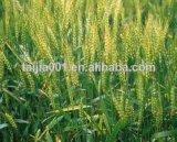 Weizen-Gluten-Mahlzeit-Tierfutter 65%Min