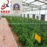 정원을%s Venlo 폴리탄산염 장 온실
