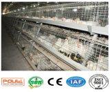 Matériel neuf de cage de ferme avicole pour le poulet à rôtir (un type bâti)