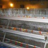 Automatisch een Apparatuur van de Landbouw van het Gevogelte van de Braadkip van de Kooien van het Kuiken van de Batterij van de Jonge kip van het Type