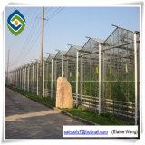 Doble capa de vidrio Agricultura de la Cámara de tomate verde