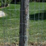 Erstklassiger galvanisierter Stahl geschweißter Draht-Garten-Zaun