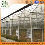 SyatemおよびHydroponicsシステムの冷却を用いる産業ガラス温室