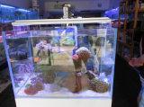 Meilleure vente en ligne White + Blue LED Aquarium pour réservoir d'eau douce