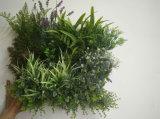 Dekorative Rahmen-Wand-hängende Gras-Pflanzen