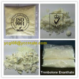 Expedição segura Bodybuilding CAS 10161-33-8 do enanthate do trenbolone dos esteróides do suplemento