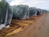 Réseau 100% de grêle de HDPE de Vierge anti