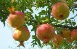 O melhor preço para a água - fertilizante solúvel do ácido Humic
