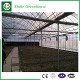 Estufa plástica da agricultura para vegetais