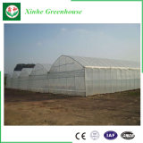 Hohes Tunnel-Film-Gewächshaus für Gemüse