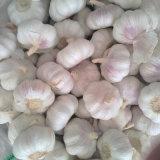 Buona qualità di aglio bianco fresco da Jinxiang