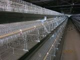 Venda quente gaiola galvanizada da galinha em África