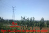 doppia torretta della trasmissione del circuito di 220kv 2D2 Sz3