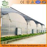 다중 경간 농업 온실 유형 및 큰 크기 플레스틱 필름 온실