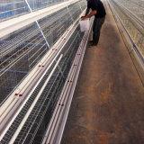 Cages de cage de poulet pour le matériel de volaille de poule de couche