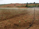 Gerade Plastikstange Microsprinkler für Sprenger-Bewässerung