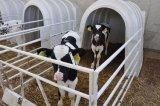 Поголовье Cow струбцина вальмы икры