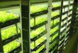 Uiterst dunne 21mm leiden groeien Licht voor de Fabrieken van de Installatie van Multi-Layer Systeem van de Cultuur