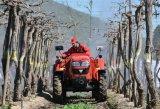 Fornitore del trattore agricolo di Foton Lovol 50HP