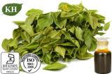 Olio 100% del foglio di Natura Lflavorant Buchu CAS no. 68650-46-4
