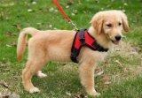 Uitrusting van de Hond van het Huisdier van de Sport van de Stof van het Netwerk van het zadel de Duurzame voor Honden