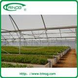 HandelsFixed Vent Rose Greenhouse für Großverkauf