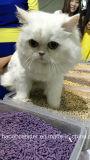 Aufhäufung und Flushable Tofu-Katze-Sänfte