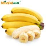 Reine natürliche/grüne Nahrung/gutes Geschmack-Bananen-Fruchtsaft-Puder